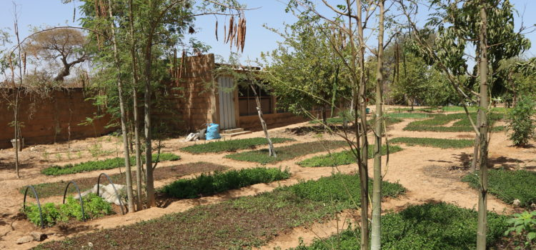 Irrigation system supplied by sustainable well: solar pump, a green solution